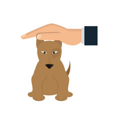 hand with sick pet dog care design vector image