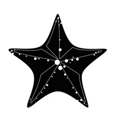 sea star isolated vector image
