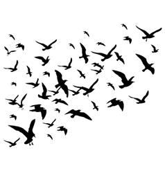 Flying birds flock isolated on vector