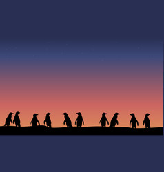 lined penguin silhouette at night landscape vector image