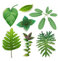 Different shape of leaves vector