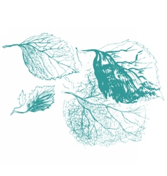 Leaf of birch tree vector