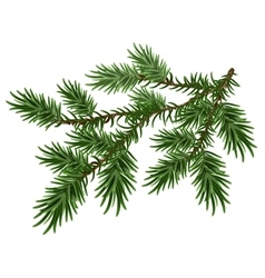 Fur-tree branch green fluffy pine branch vector