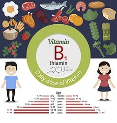 Vitamin B1 or Thiamin infographic vector image