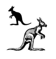 symbol of australia vector image vector image