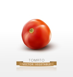 Tomato isolated on white background vector