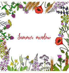 Wild herbs frame vector