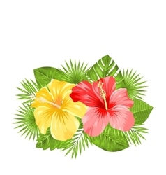 Beautiful colorful hibiscus flowers blossom and vector
