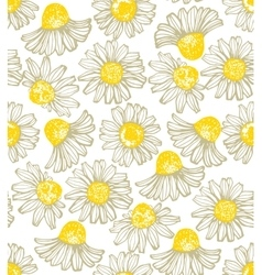 Hand drawn chamomile background vector