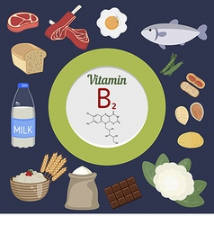 Vitamin b2 or riboflavin infographic vector