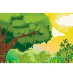 Jungle at sunset vector image vector image