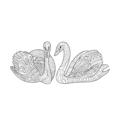 Swans coloring book for adults vector