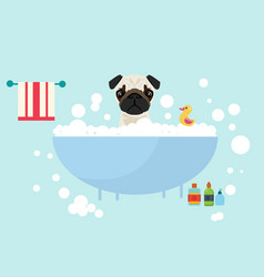 Dog take a bath wet grooming with soap shampoo vector