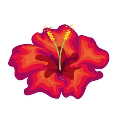 Tropical flowers decorative card vector