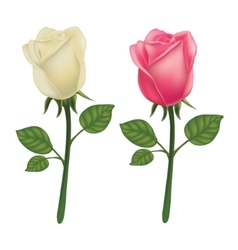 Rose isolated on a white background vector
