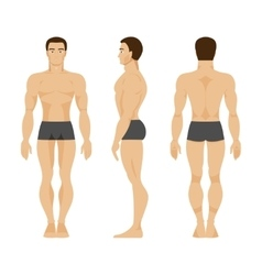 Male anatomy vector