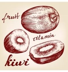 Fruit kiwi set hand drawn llustration vector