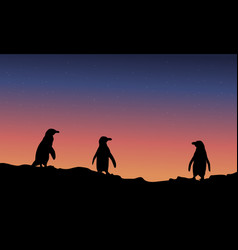 silhouette of penguin at night landscape vector image vector image