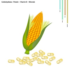 Sweet corn with vitamin b and minerals vector