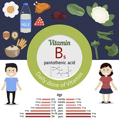 Vitamin b5 or pantothenic acid infographic vector