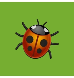 Ladybird Bug on Green Leaf vector image