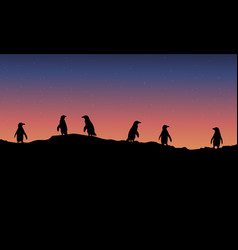 lined penguin scenery at night vector image