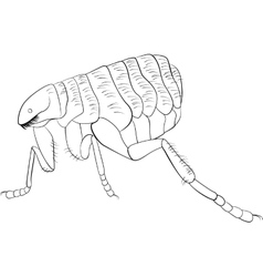 Black and white image of flea vector