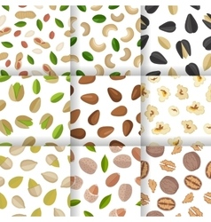 Set of nuts and seeds seamless pattern vector