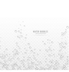 transparent water bubbles on white background vector image vector image
