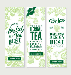 Sketch healthy tea vertical banners vector
