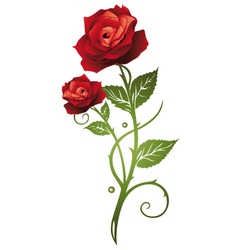 Rose floral vector image