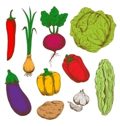 Fresh vegetables sketches for agriculture design vector