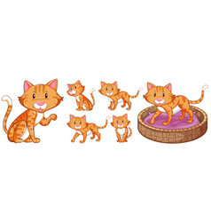 cute cat in differnet actions vector image vector image