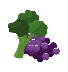 Grape and broccoli icon vector