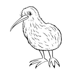 animal outline for kiwi bird vector image