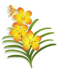 Yellow vanda orchid vector