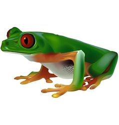 Tree Frog vector image