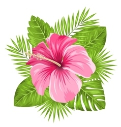 Beautiful pink hibiscus flowers blossom and vector