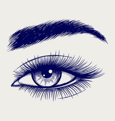 Pen sketch of beautiful female eye vector