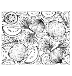 Hand drawn background of guava and indian gooseber vector