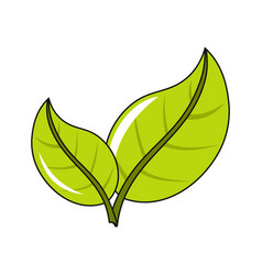 eco icon green leaf vector image vector image