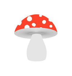 Amanita isolated poisonous mushroom on white vector