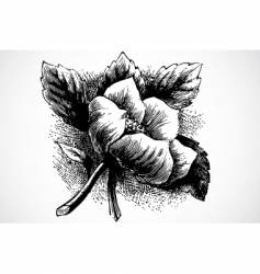 woodcut flower vector image