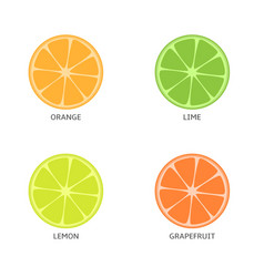 Pieces of citrus fruits vector