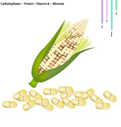 Corn crop with vitamin b and minerals vector