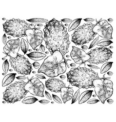 Hand drawn background of horned melon or kiwano vector