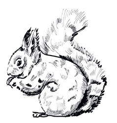 hand drawn squirrel on a white background vector image