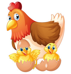 Mother hen and two chicks in eggs vector