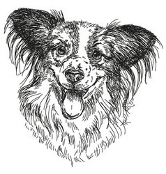 Papillon portrait hand drawing vector