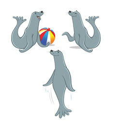 seal poses vector image
